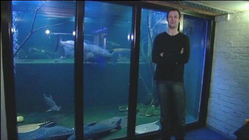 diy wood aquarium